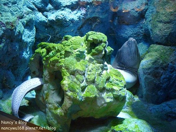尼克斯海洋公園-15.JPG