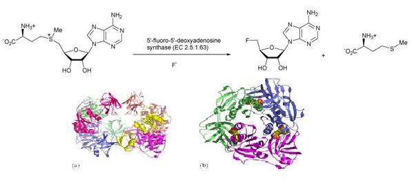 Fluorinase2.JPG