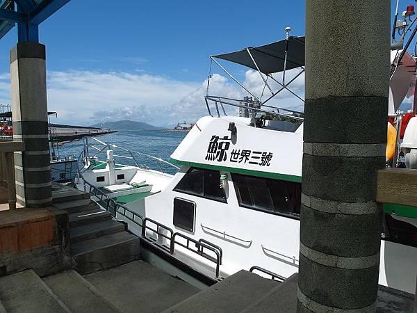 花蓮旅遊賞鯨