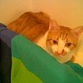 床頭貓2.jpg
