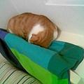 床頭貓3.jpg
