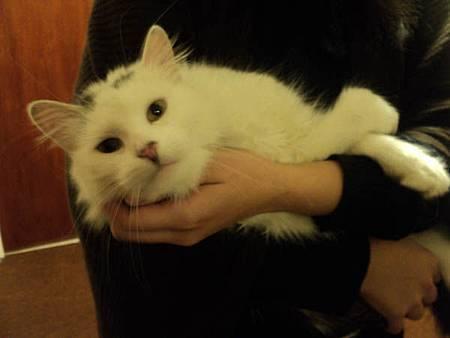 白邊抱貓情侶頭像