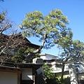2010 Japan 255.jpg