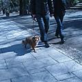 2010 Japan 658.jpg