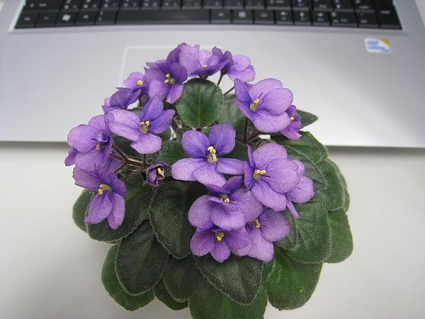 FLOWER 015.jpg
