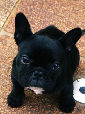 小小狗.... 日本怎麼什麼都是迷你的??....