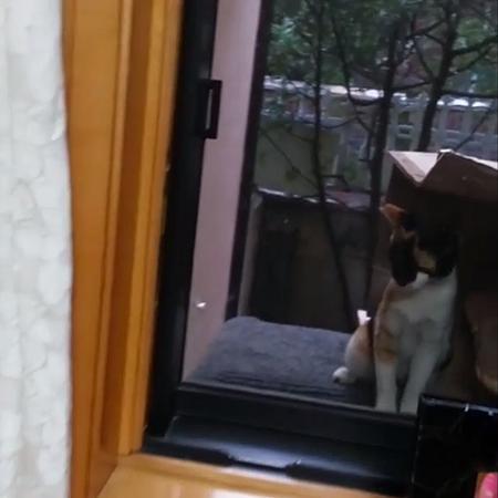 not catie