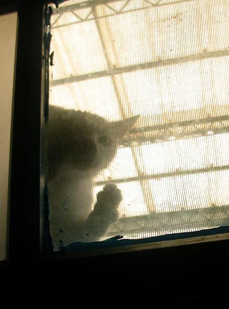 窗外的小流氓