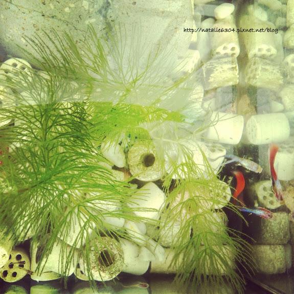 freedom aquarium
