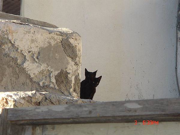 oia小巷與羞澀的貓咪打招呼