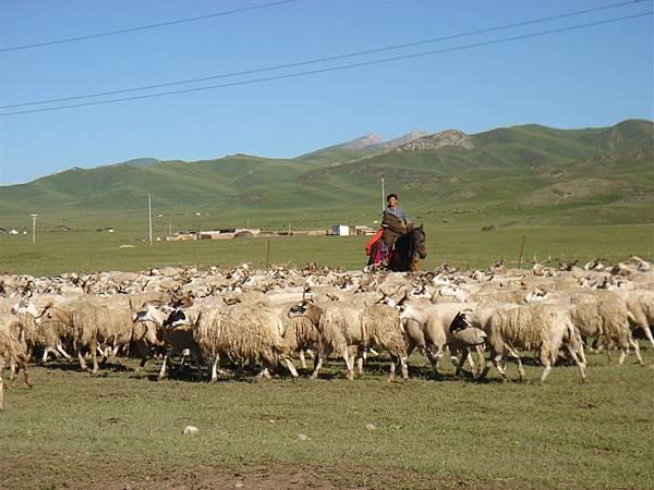 牧人趕牛群