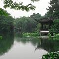 杭州風荷0527