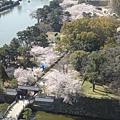 20120408和歌山城