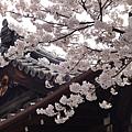 20120410京都三年板
