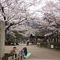 20120410圓山公園