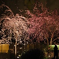 20120410夜宿旅館中庭