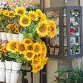 0820-Cotrona 歐洲的花草總是恣意的長,信手拈來便是美麗,鮮艷的不可方物