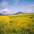 納帕海草原
