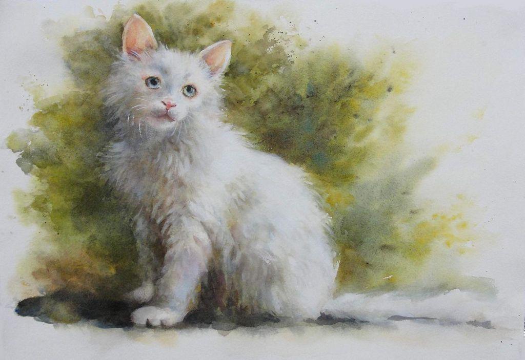 chen cat a.JPG