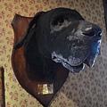 巴斯克維爾之犬