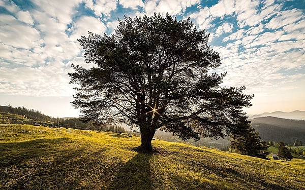 tree-338211_1280.jpg