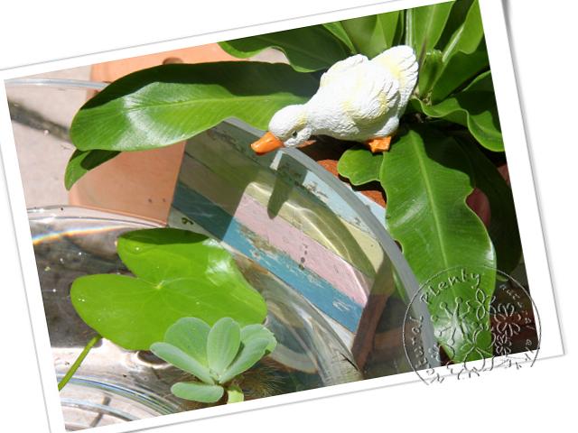 20110711沁涼一夏_02.jpg