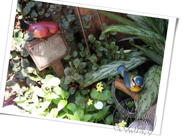20110917園藝寶貝_05.jpg