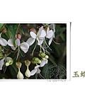 20111102秋日花草_04.jpg