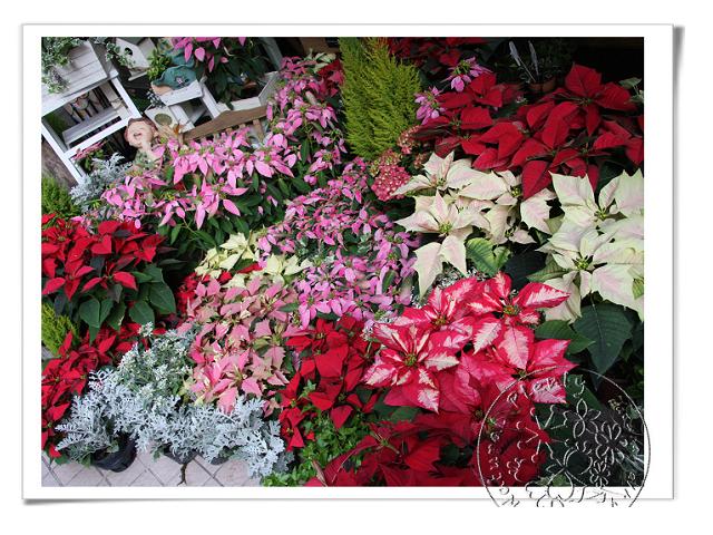 20111122-聖誕盆栽_02.jpg