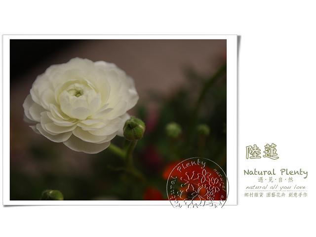 20120315_花草顏色_01