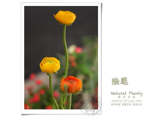 20120315_花草顏色_02