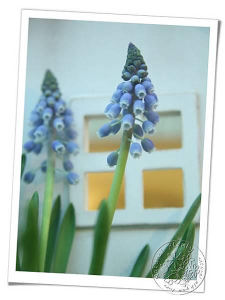 20110110優雅的藍_06.jpg