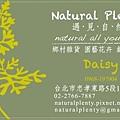 NaturalPlenty名片二Daisy-s.JPG