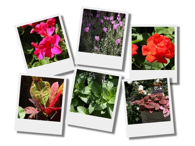 20110330鮮花.jpg