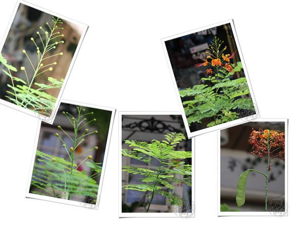 20100824開花結果_06.jpg