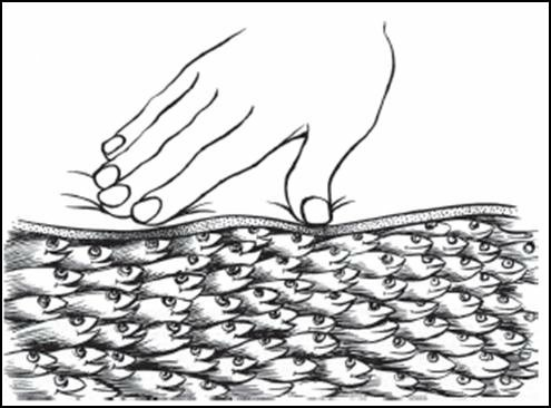 Myofascial-tissue-illustrated-as-a-school-of-fish-A-therapist-working-with-myofascial.png