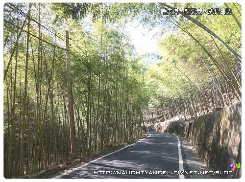 竹林4.jpg