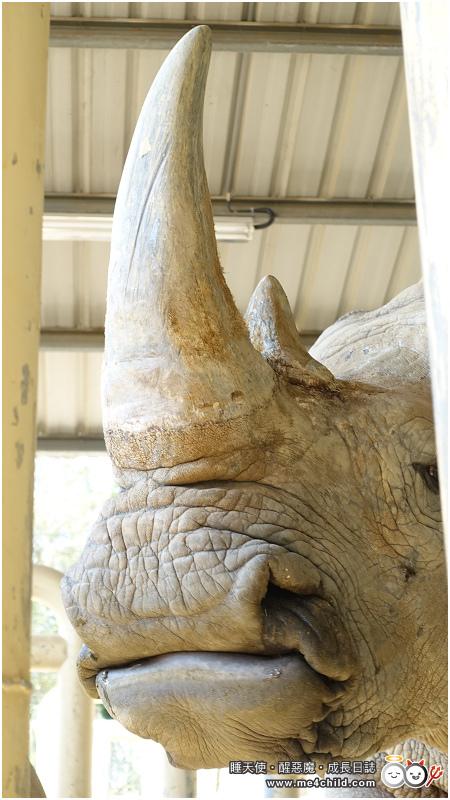 白犀牛F18