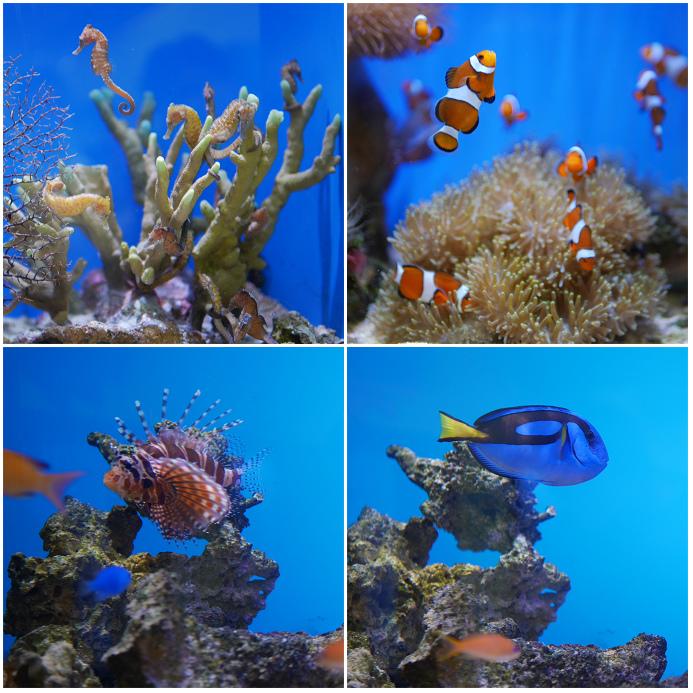 美麗海水族館直營店