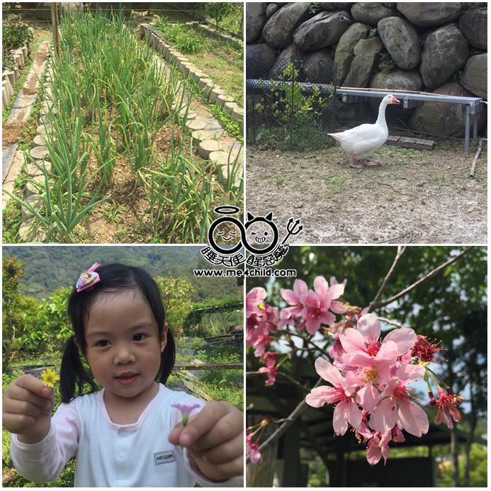芳樺園10
