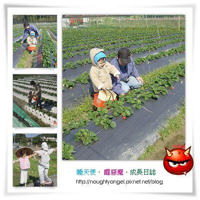 高橋草莓園.jpg