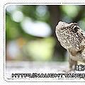 20100521_清境F5.jpg