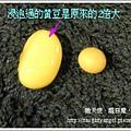 豆漿2.jpg