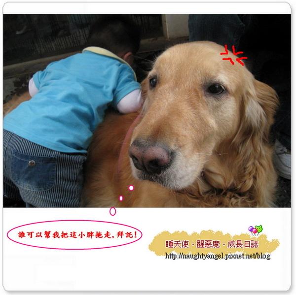 小犬愛大犬B.jpg
