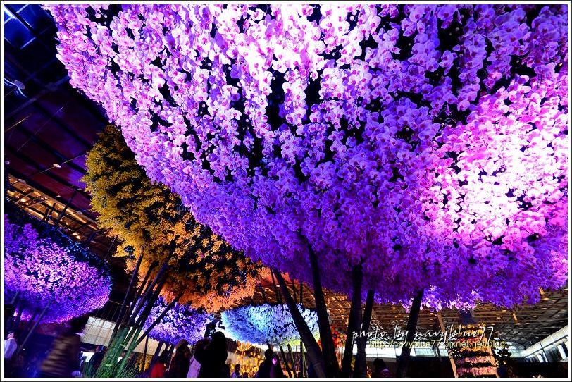 orchid00.jpg