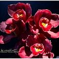 orchid12.jpg