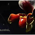 orchid15.jpg