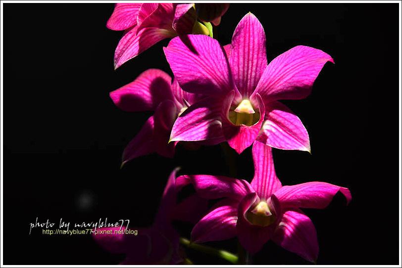 orchid14.jpg