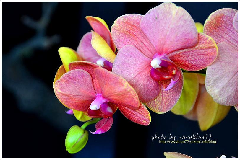 orchid16.jpg
