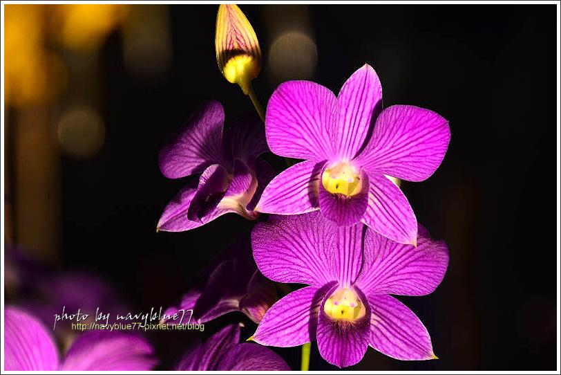 orchid17.jpg